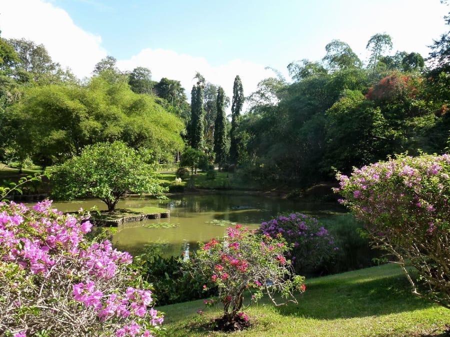 TravelXL-van-Limburg-Sri-Lanka-Peradeniya-botanische tuin