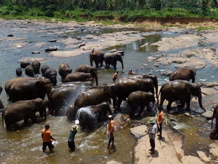 TravelXL-van-Limburg-Sri-Lanka-Pinnawela-olifantenweeshuis