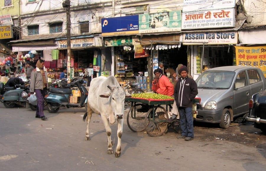 TravelXL-van-Limburg-India-onderweg