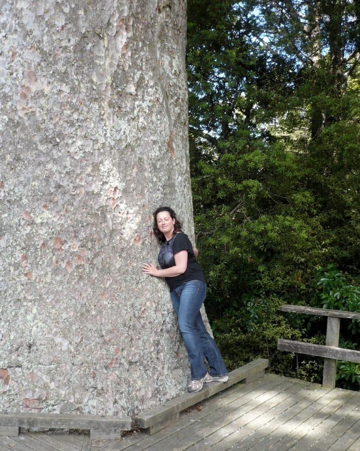 TravelXL-van-Limburg-NIEUWZEELAND-Noordereiland-Kauri-Knuffelboom