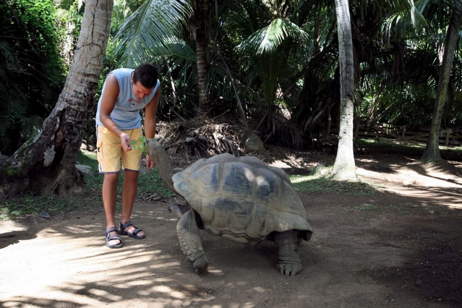 TravelXL-van-Limburg-Seychellen-SilhouetteIsland-schildpaddenopvang