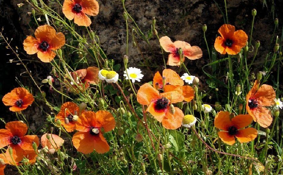 TravelXL-van-Limburg-ZAKYNTHOS-bloemen