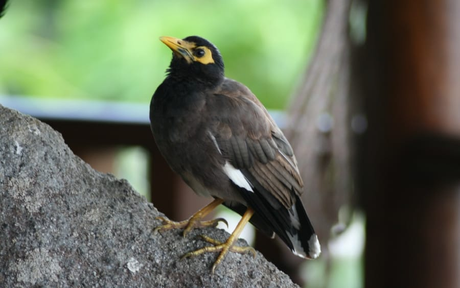 TravelXL-van-Limburg-Seychellen-vogel