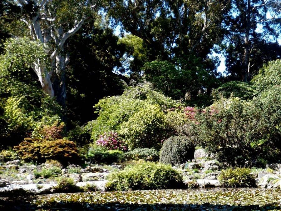 TravelXL-van-Limburg-NieuwZeeland-Christchurch-Botanische-tuin