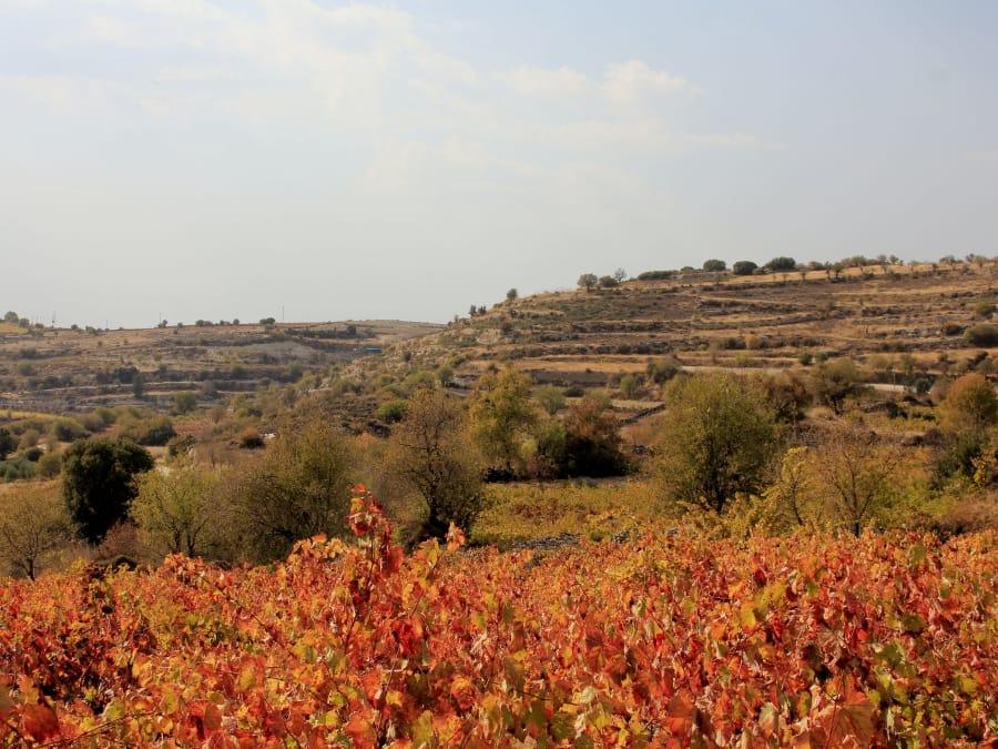 TravelXL-van-Limburg-CYPRUS-wijnproeverij