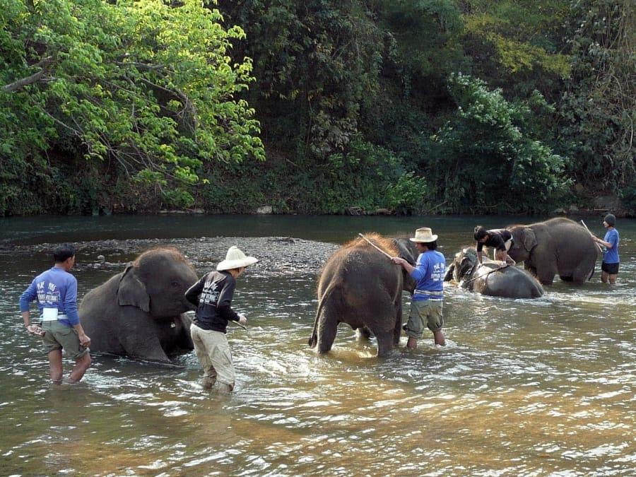 TravelXL-van-Limburg-THAILAND-olifantenshow-wassen