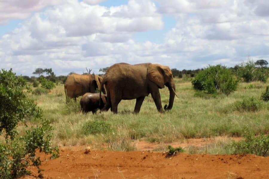 TravelXL-van-Limburg-KENIA-TsavoEast-olifanten