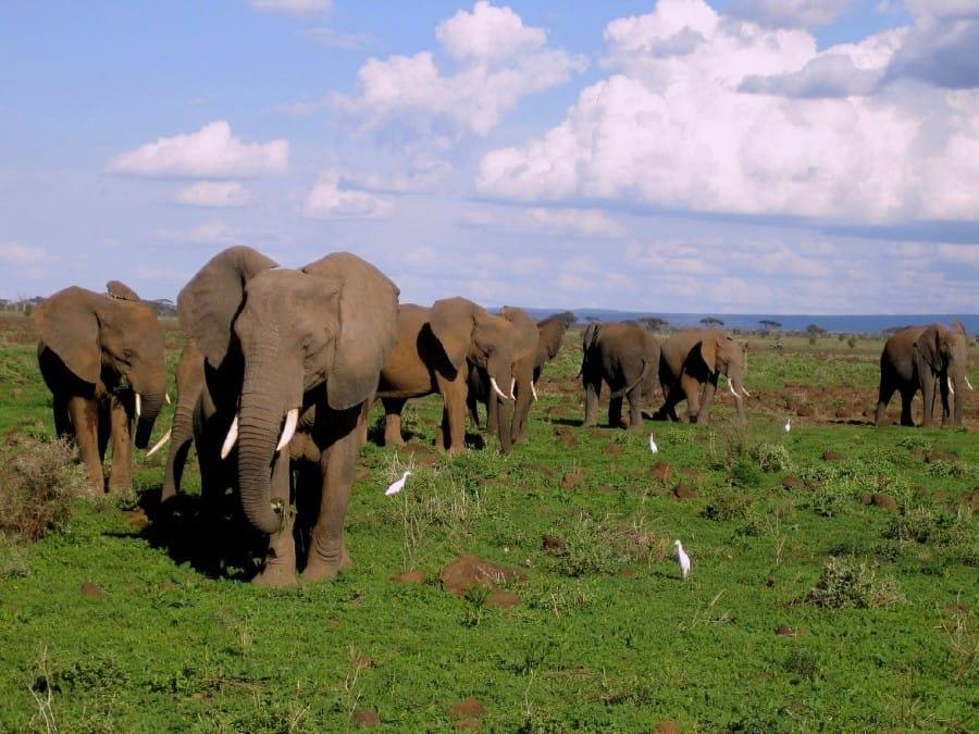 TravelXL-van-Limburg-KENIA-safariland