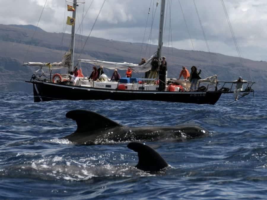 TravelXL-van-Limburg-TENERIFE-walvis-safari