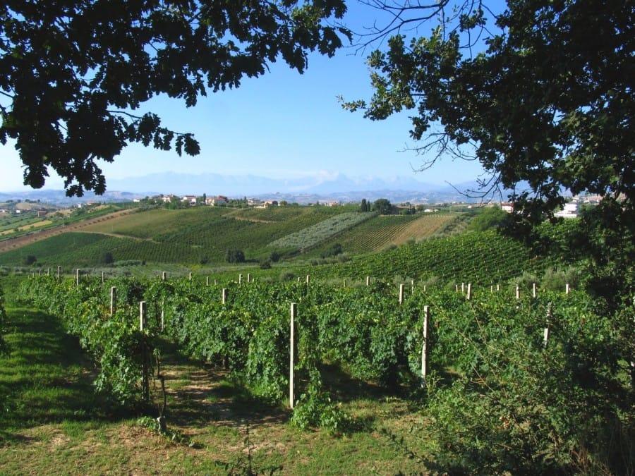 TravelXL-van-Limburg-PUGLIA-wijngaarden