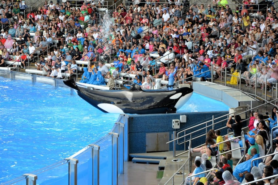 travelxl-van-limburg-usa-sea-world-orlando