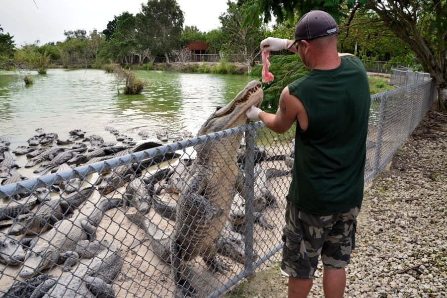 travelxl-van-limburg-usa-alligators-voeren