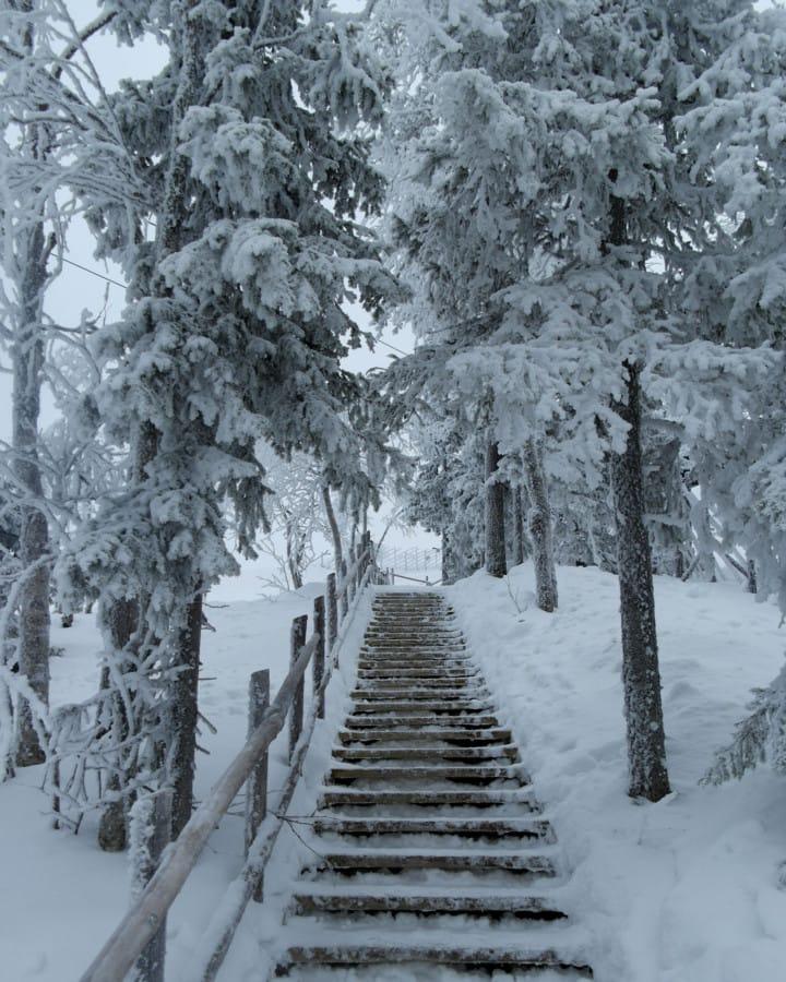 travelxl-van-limburg-fins-lanpland-wandelpad-levi-berg