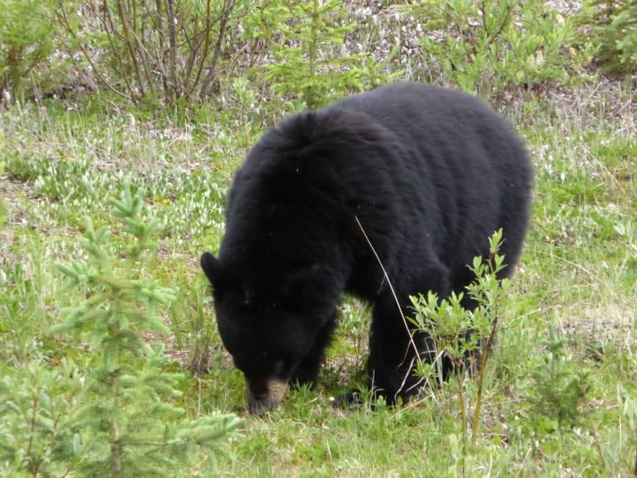 travelxl-van-limburg-canada-eerste-beer