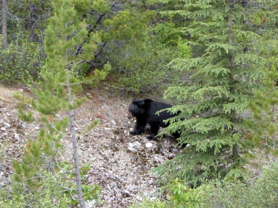 tavelxl-van-limburg-canada-tweede-beer