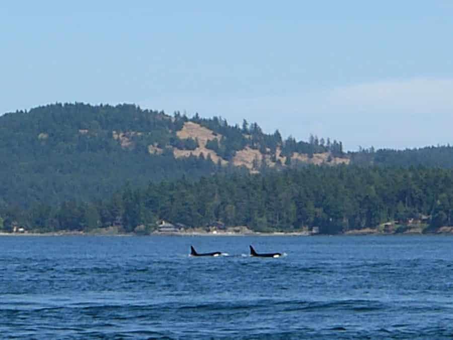 travelxl-van-limburg-canada-walvissen