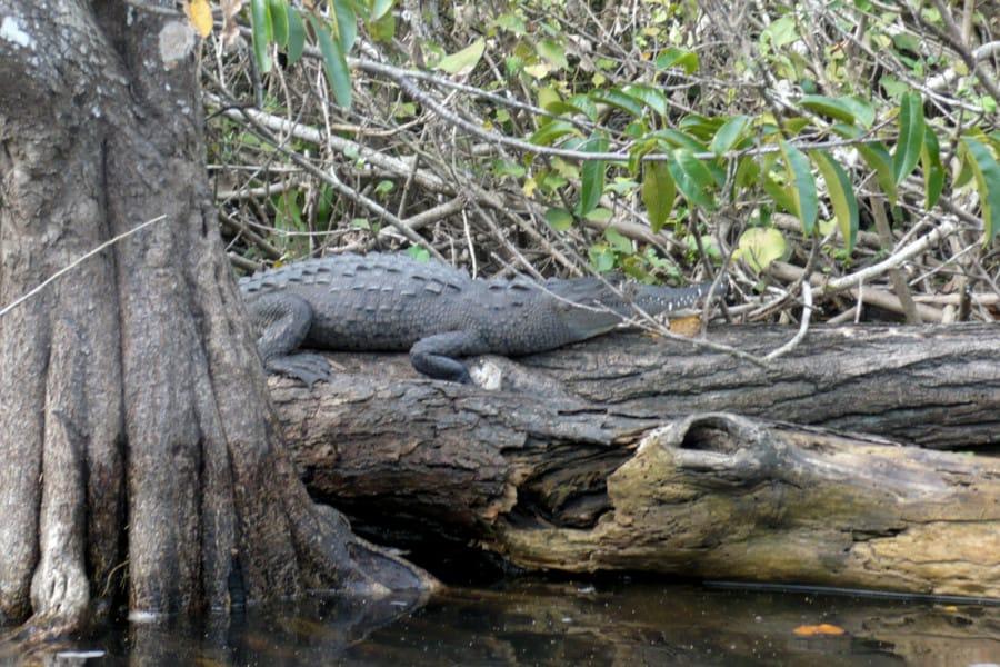 travelxl-van-limburg-puerto-vallarta- krokodillenfarm