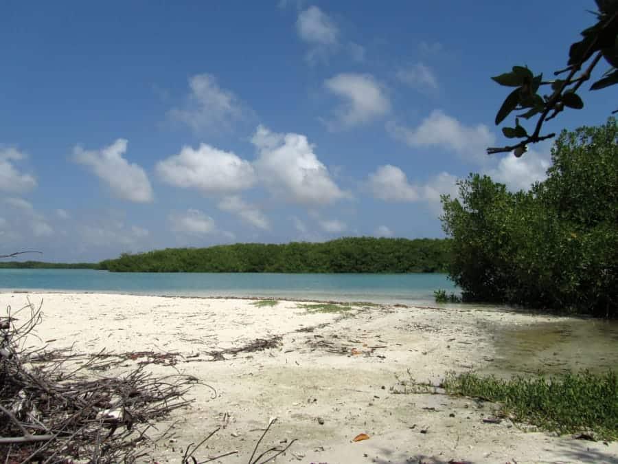 travelxl-van-limburg-bonaire-lacbay-mangrove