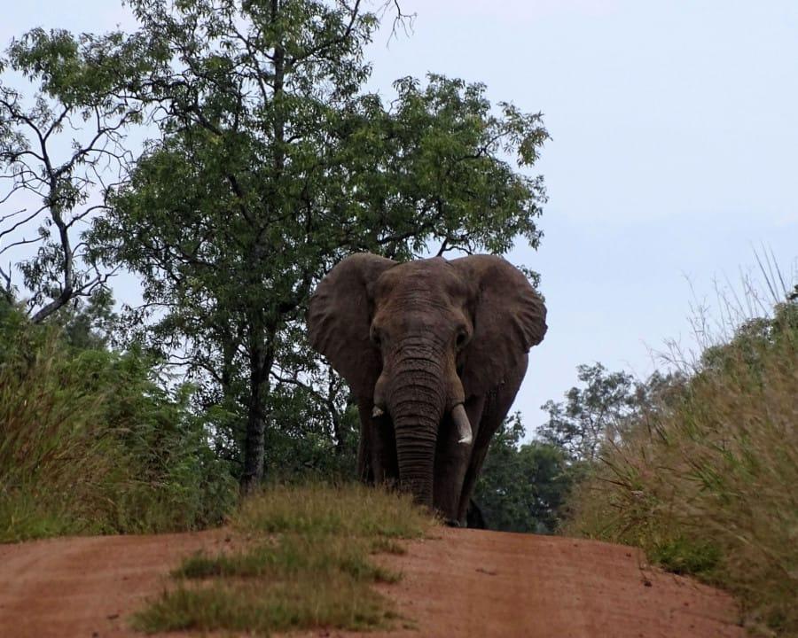 travelxl-van-limburg-zuid-afrika-welgevonden-olifant