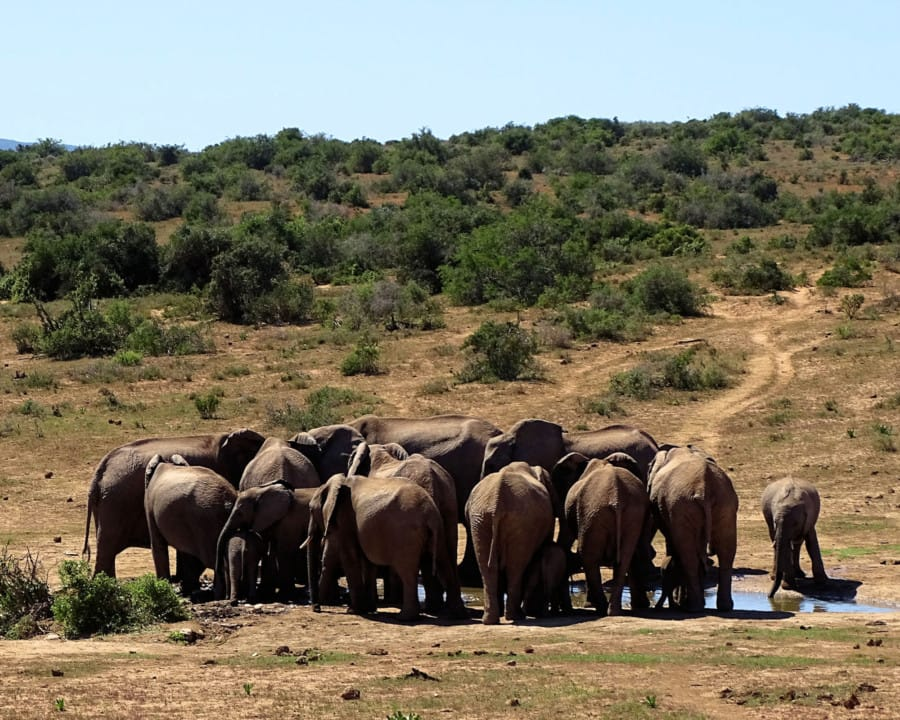 travelxl-van-limburg-zuid-afrika-addo-olifanten