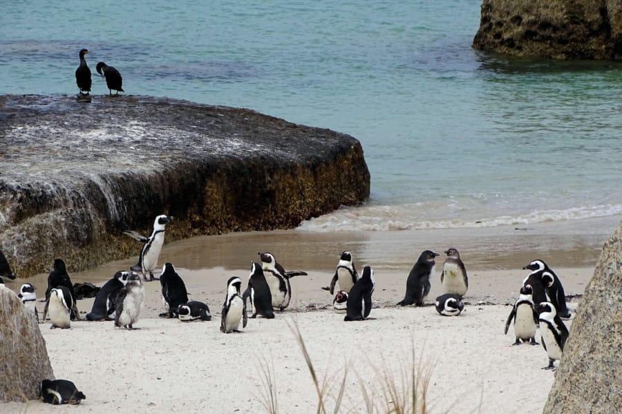 travelxl-van-limburg-zuid-afrika-boulders-beach-pinguins