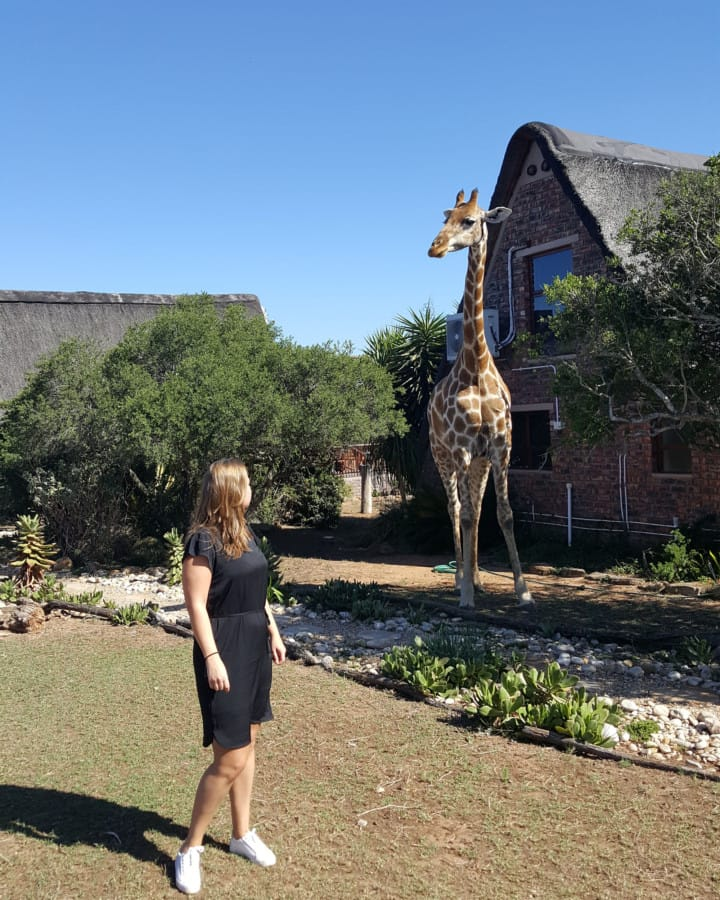 travelxl-van-limburg-zuid-afrika-giraf-voor-huisje