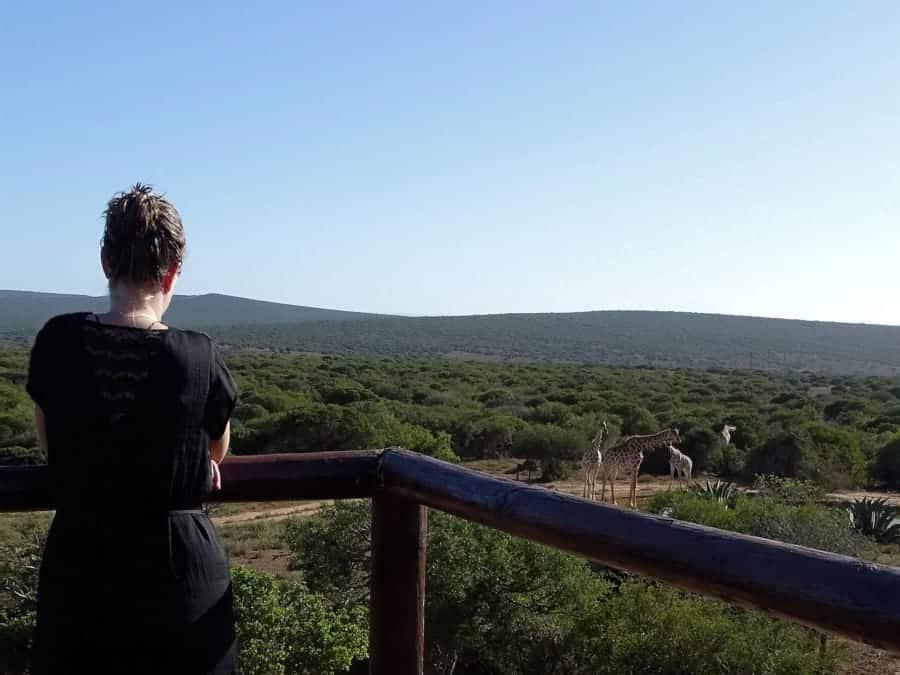 travelxl-van-limburg-zuid-afrika-giraffen-huisje