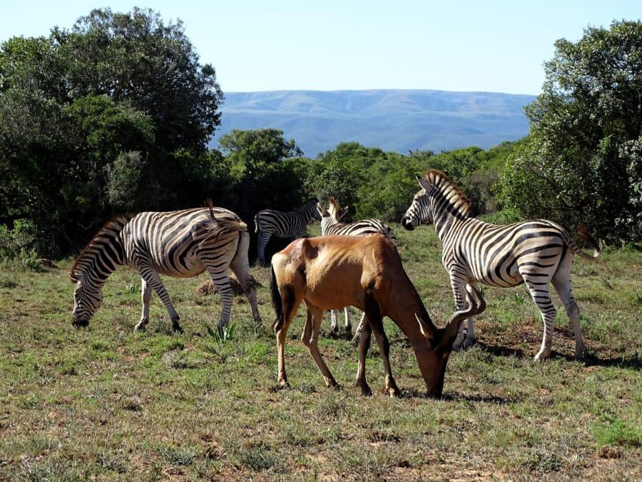 travelxl-van-limburg-zuid-afrika-klein-wild-bij-lodge